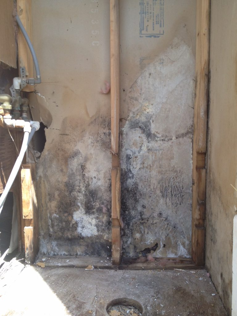Mold And The Dangers Of Ding