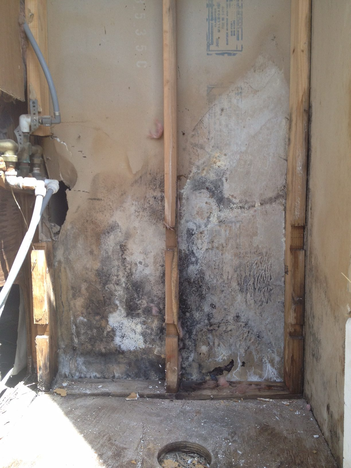 Mold Warning Signs How To Tell If You Have A Problem